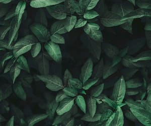 fresh, green, and wallpaper image