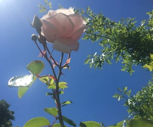 aesthetic, blue skies, and flowers image