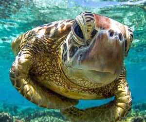 sea turtle and what a beauty image