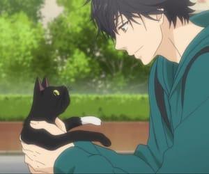 cat, tanaka, and kou image
