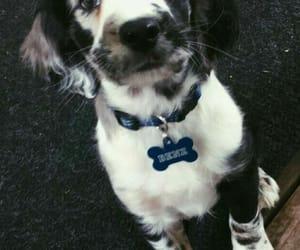 adorable, dog, and photography image
