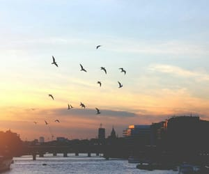 sky, birds, and city image