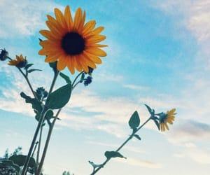 flowers, girassol, and sky image