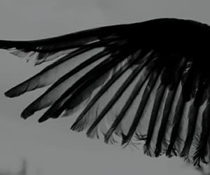 wings, black, and black and white image