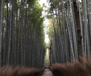 bamboo, evening, and greenery image