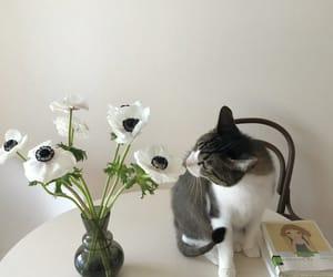 animals, cats, and interior image