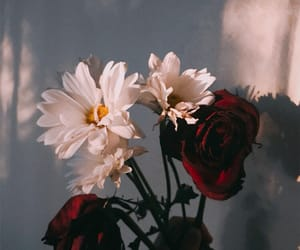 aesthetic, dark, and flowers image