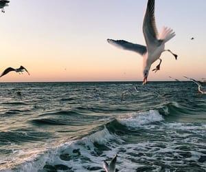 birds, summer, and sea image