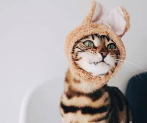 cat, funny pic, and vampire bunny cat image