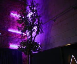 aesthetic, neon, and purple image