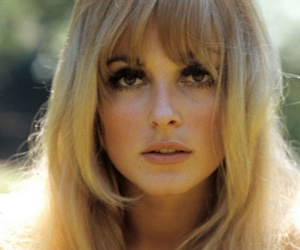 sharon tate, vintage, and actress image