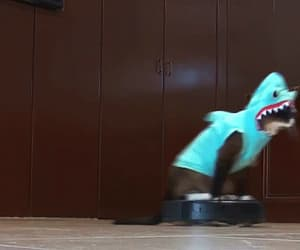 cats, faster, and gif image
