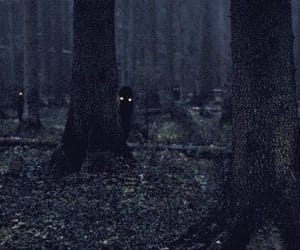 gif, forest, and dark image