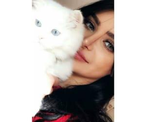 Algeria, animals, and cat image