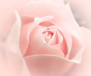 blush, femininity, and girly image