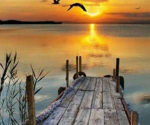 birds, sunset, and gaviotas image