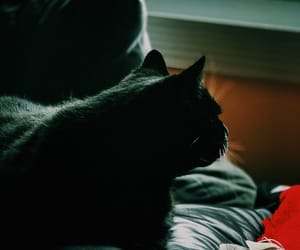 background, tumblr, and black cat image