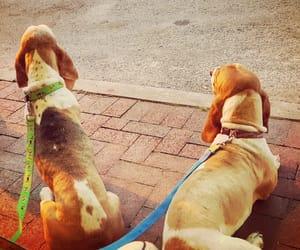 dogs, delmarva, and ice cream image