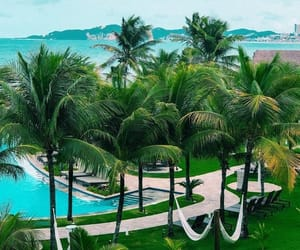 palm and palms image