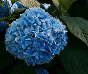 blue, flores, and girl image