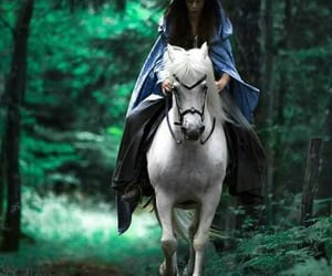 fantasy, forest, and horse image