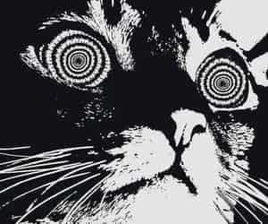 cat, black and white, and drugs image