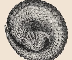 scientific illustration and pangolins image