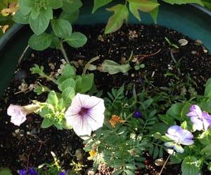 backyard, flowers, and green image