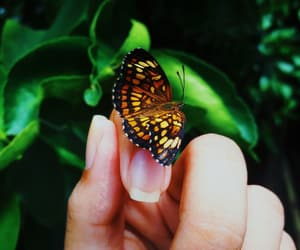 animal, butterfly, and feed image