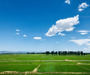 blue, field, and nature image