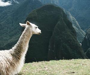 llama, relax, and machu picchu image