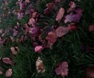 fall, grass, and leaves image