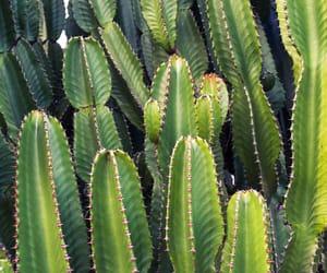 cactus, cuties, and dessert image