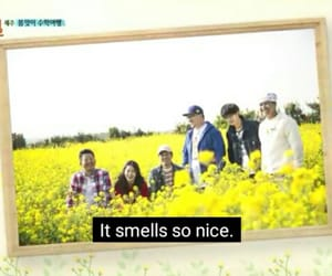 funny, variety show, and korean image