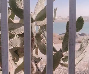 background, desert, and summer image