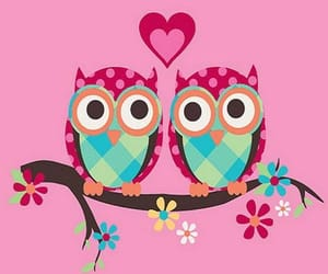 owls and owl wallpapers image