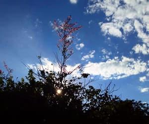 brasil, flower, and minas gerais image