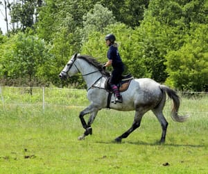 dressage, muscle, and konie image