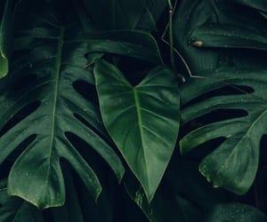 green, plants, and dark image