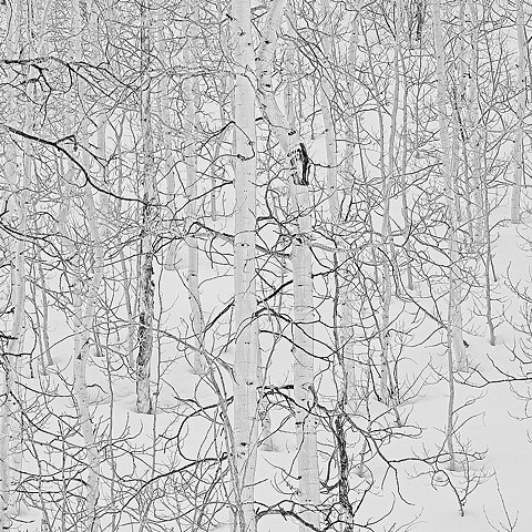 branches, minimal, and photography image