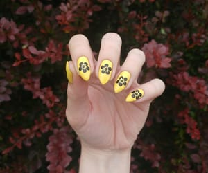ideas, manicure, and nail image