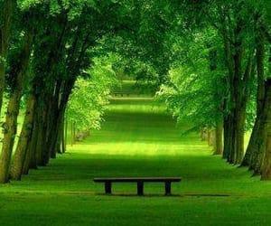 green, landscape, and natureza image