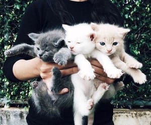 animal, kitten, and cat image