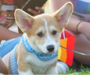 dog, pride flag, and pride image
