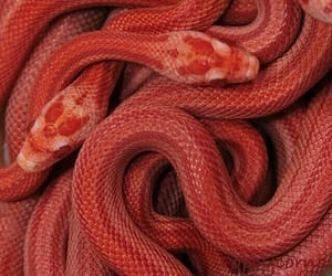 snake, red, and aesthetic image