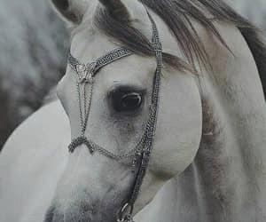 horse white image