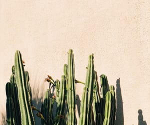 green, summer, and kaktus image
