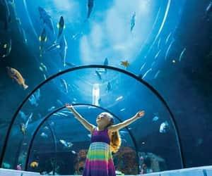 aquarium, travel, and marin image