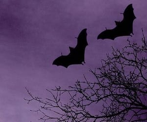 bats, purple, and dark image