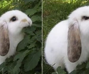 animals, love, and bunny image